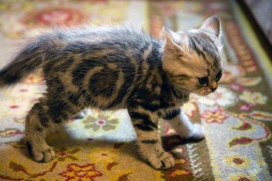 Pet Stain and Odor Removing from Oriental Rugs